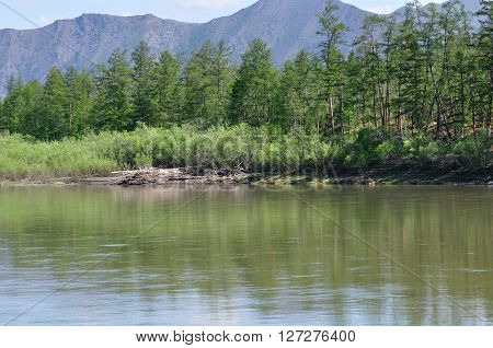 floating down the river in the summer in the taiga , forest green