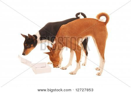 Two Dogs Find Empty Box