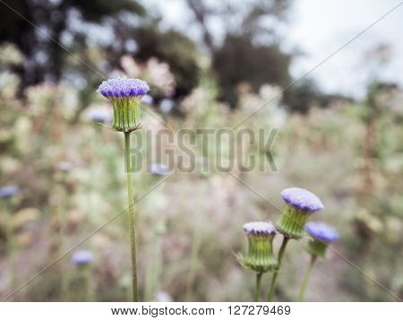 Side view of little purple grass flower in the morning on blurry background Close Up Soft Focus\\\\\\\\\\