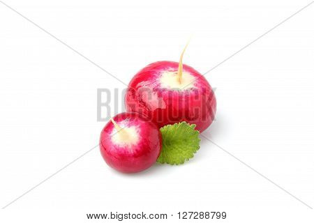 Two red radish fresh with leaves isolated on white background closeup.