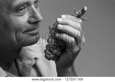 Horizontal portrait of a farmer holding a freshly harvested grape in his left hand and smelling it