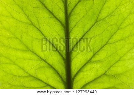 green plant leaf texture close up macro