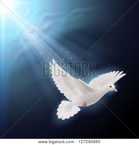 White dove flying in sunlight against dark blue sky as symbol of peace