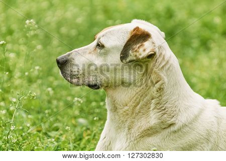 Portrait of Mongrel Dog against the Grass Background