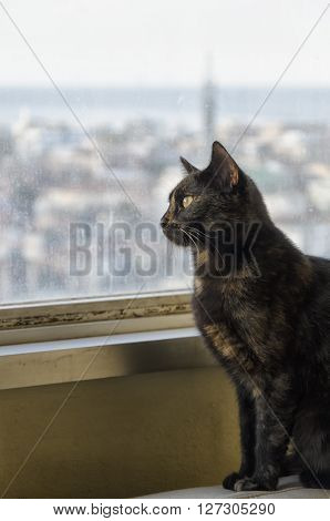 Small black cat with townscape in the background