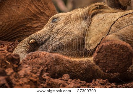 Baby elephant posing for camera in one of the national parks of Kenya