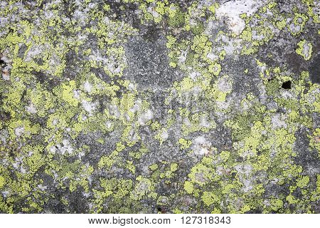 Lichen In Norway