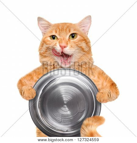 Hungry cat holding food bowl , isolated on white background.