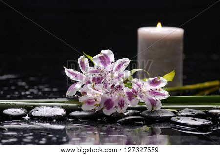 spa concept â??branch orchid with stones and green plant
