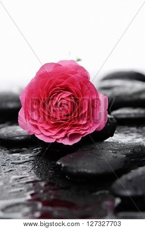 Red Ranunculus with therapy stones-wet background