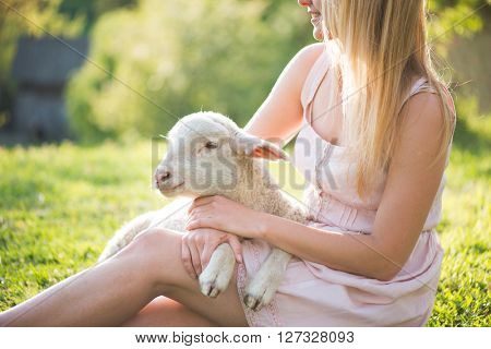 Close up image of cute, young lamb taking care by farmer woman.