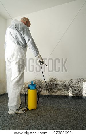 specialist during combat mold in an apartment