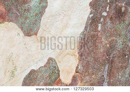Closeup peeling skin of trunk of tree texture background