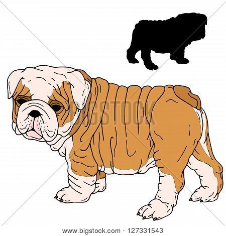 Bulldog puppy realistic vector illustration black silhouette