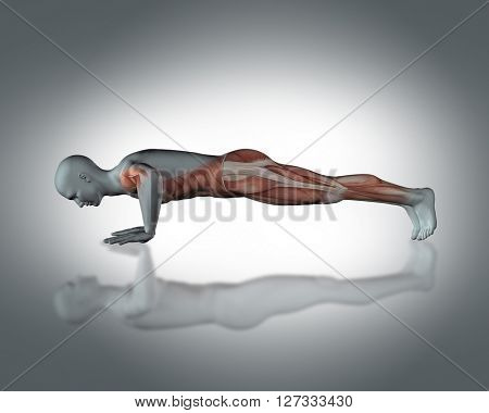 3D render of a medical figure with partial muscle map in push up position