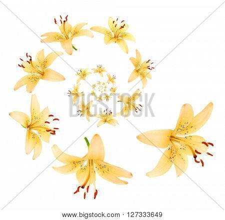 Flower petals spiral isolated on white