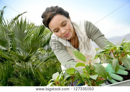 Middle-aged woman gardening outside