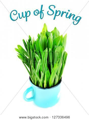 Wild leek in mug and inscription Cup of Spring