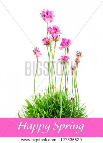 Beautiful flowers with green grass and text isolated on white