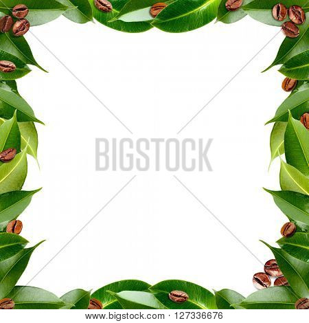 Frame made of coffee beans and green fresh leaves, isolated on white