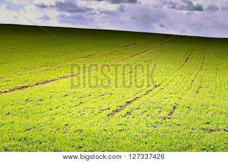 Spring Photo Of Verdant Field In Ceske Stredohori Region In Czech Landscape