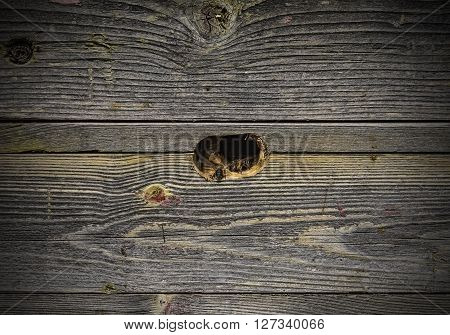 Bees fly in a wooden beehive. Subject picture - the life of bees, apiary