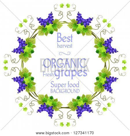 Super grape frame. The natural design banner,ticket, leaflet and so on. Place for text. Isolated elements.
