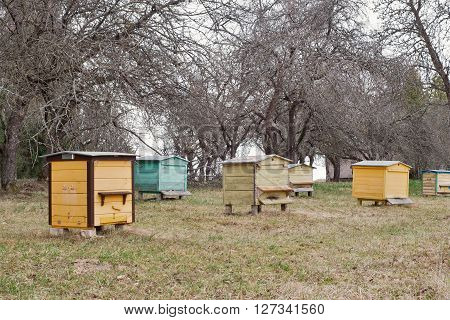 Colorful wooden bee hives in a garden in early spring
