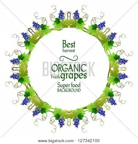 Best grape round frame. The natural design banner,ticket, leaflet and so on. Place for text. Isolated elements.