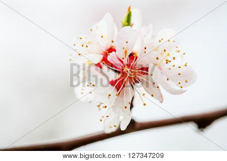background with flowers on a spring day