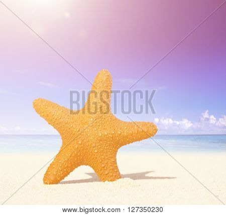 Starfish on a Tropical Beach Concept