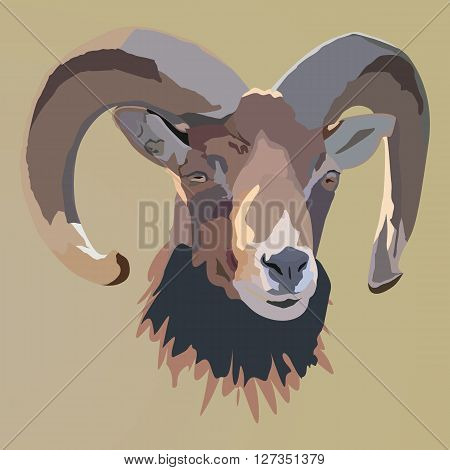 Brown head of the mountain sheep. Vector illustration. Mountain sheep.