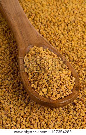Whole unprocessed fenugreek (Trigonella foenum-graecumcumin) seeds in wooden scoop on fenugreek seed background