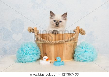 Cute rag doll kitten cat in a wooden basket with bathroom details