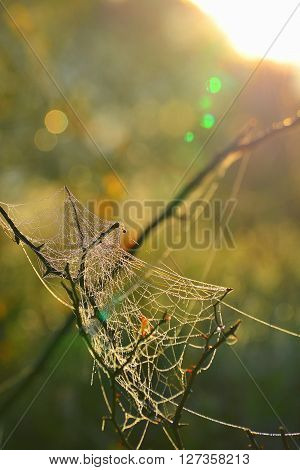 Spiderweb covered in dew on a spring morning. ** Note: Soft Focus at 100%, best at smaller sizes
