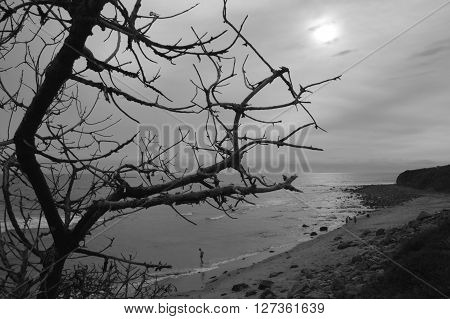 Haunting tree branches over beach with little boy testing the waters in the distance ** Note: Soft Focus at 100%, best at smaller sizes