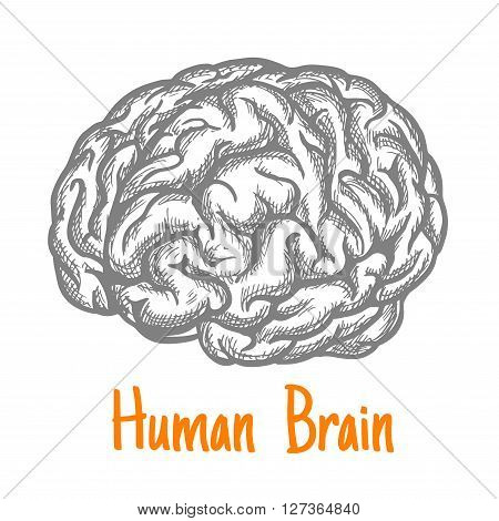 Human brain engraving stylized sketch symbol in gray colors for mind, creativity or health care theme design with caption Human Brain below