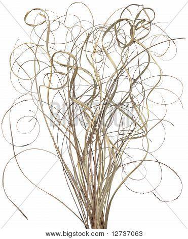 Curly Stick Arrangement