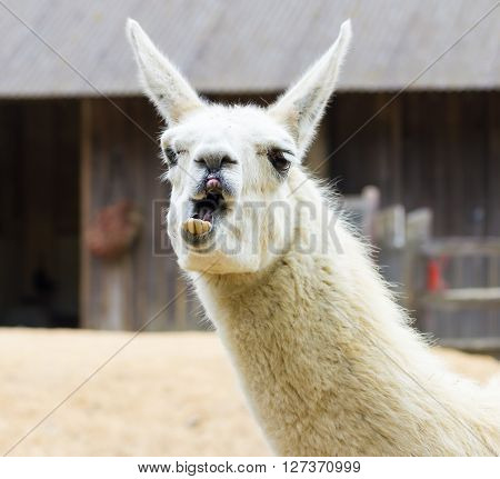 Llama lama smile and for fun children