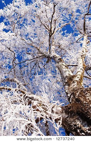 White frost