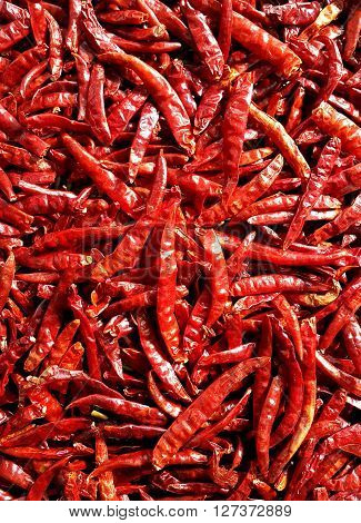 Dried red chili peppers or dehydrate chilies