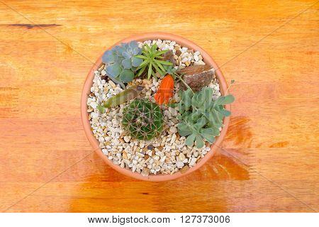 cactus and flaming katy in pot with brown background