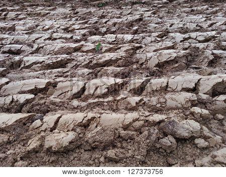Plowed Cultivated Loam Soil Field