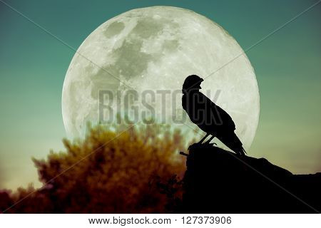 Night Sky With Full Moon, Tree And Silhouette Of Crow That Can Be Used For Halloween. Vintsge.
