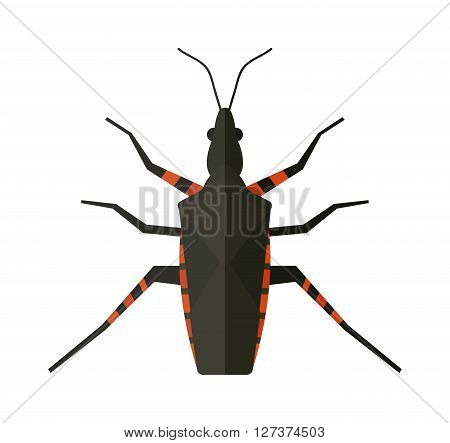Water scavenger beetle isolated on white background wildlife animal coleoptera vector bug. Nature water beetle and zoology water beetle bug. Wildlife insect water black beetle ecology detail.