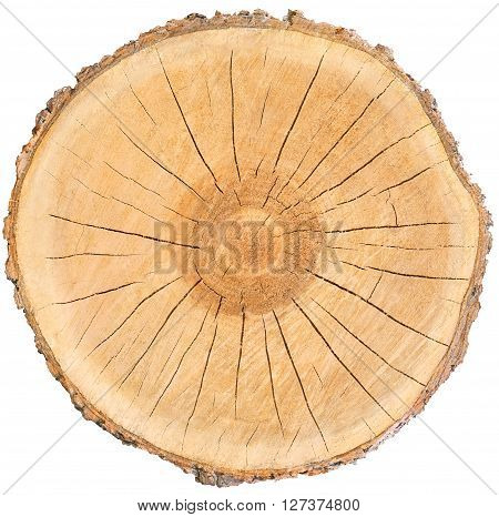 Piece of radiating warm wood circle with bark cracks rings