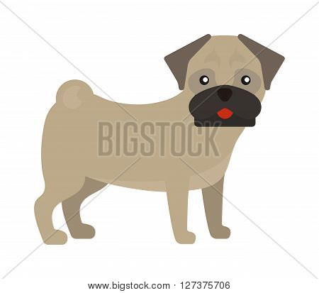 Pug dog standing animal canine purebred puppy portrait funny young small pet vector. Funny pug dog and small pug dog. Cute pug dog mammal and pug dog adorable puppy. Wrinkles baby face dog.