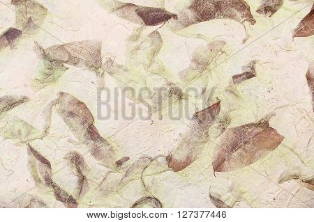 solften brown and green mulberry paper with Dry leaf texture background.