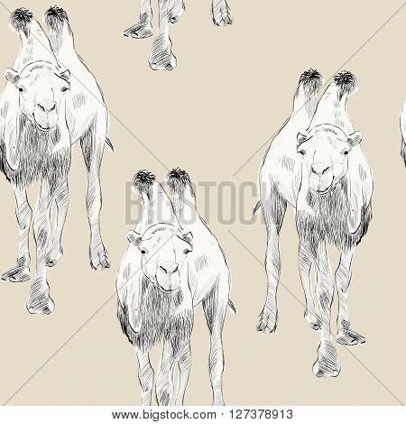 sketch of Bactrian camel on beige background