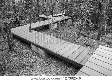 Wooden Boardwalk In Forest (black & White)